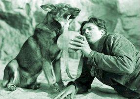 hond vs wolf